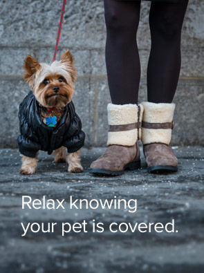 Relax, Canadian Pet Health Insurance
